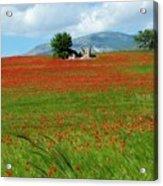 Red Fields Acrylic Print