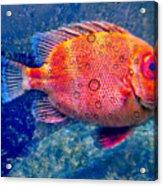 Red Fish Blue Fish Acrylic Print