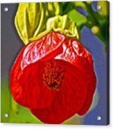 Red Flower At Pilgrim Place  In Claremont-california Acrylic Print