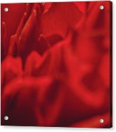 Red Flower Detail Acrylic Print