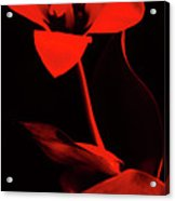 Love For Red Flower #1. Acrylic Print