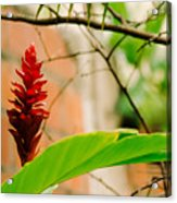 Red Flower I Acrylic Print