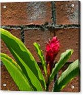 Red Flower Iv Acrylic Print