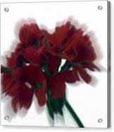 Red Flower Motion Acrylic Print