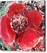 Red Flower, Acrylic Print