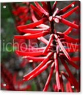 Red Flower Under The Light Of The Setting Sun Acrylic Print