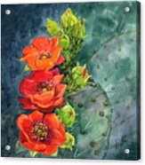 Red Flowering Prickly Pear Cactus Acrylic Print