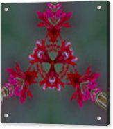 Red Flowers Abstract Acrylic Print