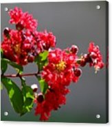 Red Flowers After The Rain Acrylic Print