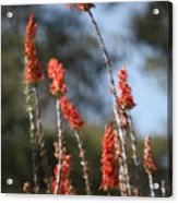 Red Flowers In Clouds Acrylic Print