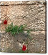 Red Flowers In Ruins Acrylic Print