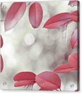 Red Foliage. Silver Light Acrylic Print