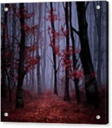 Red Forest 2 Acrylic Print