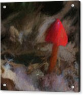 Red Forest Mushroom Acrylic Print