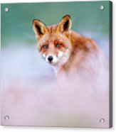 Red Fox In A Mysterious World Acrylic Print