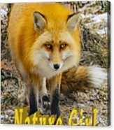 Red Fox Nature Girl Acrylic Print