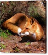 Red Fox Resting Square Acrylic Print