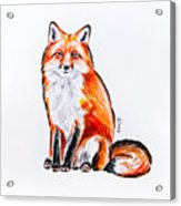 Red Foxie Acrylic Print