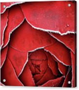 Red Frosty Metal Rose Acrylic Print