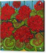Red Geranium Acrylic Print