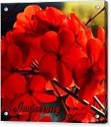 Red Geranium Anniversary Greeting Acrylic Print
