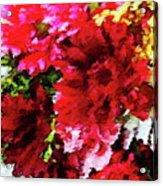 Red Gerbera Daisy Abstract Acrylic Print