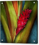 Red Ginger Window Acrylic Print
