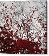 Red Glitter Acrylic Print