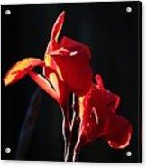Red Glow Acrylic Print