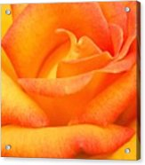 Red Gold Rose Acrylic Print