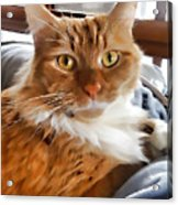 Red-haired Kitten Acrylic Print