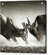 Red Hartebeest Dual In Dust Acrylic Print