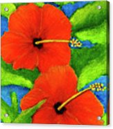Red Hawaii Hibiscus Flower #267 Acrylic Print