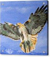 Red Hawk, 11x14, Oil, '07 Acrylic Print