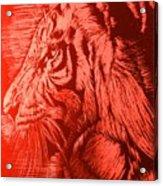 Red Head Tiger Acrylic Print