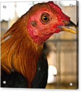 Red Headed Chicken Head Acrylic Print