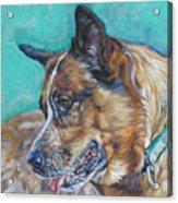Red Heeler Australian Cattle Dog Acrylic Print by Lee Ann Shepard