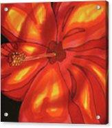 Red Hibiscus 1 Acrylic Print