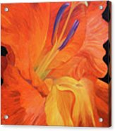 Red-hot Flower Acrylic Print