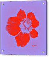 Red Hot Passion Flower Acrylic Print