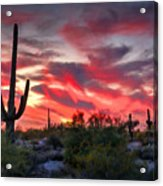 Red Hot Sonoran  Acrylic Print