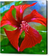 Red Hyacinth In Bourbon Resort Gardens Near Iguazu Falls National Park-brazil  Acrylic Print