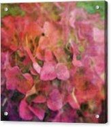 Red Hydrangea 2421 Idp_2 Acrylic Print