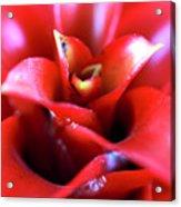 Red Invitation At The Desert Botanical Garden Acrylic Print