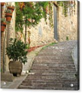 Red Ivy And Steps In Assisi Italy Acrylic Print