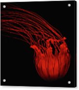 Red Jellyfish Acrylic Print