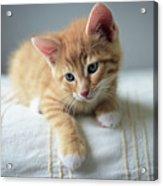 Red Kitten On A Beige Blanket Acrylic Print