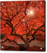 Red Lace Acrylic Print