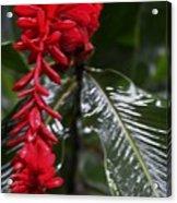 Red Lava Flower Acrylic Print