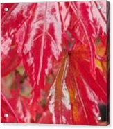 Red Leaf Abstract Acrylic Print